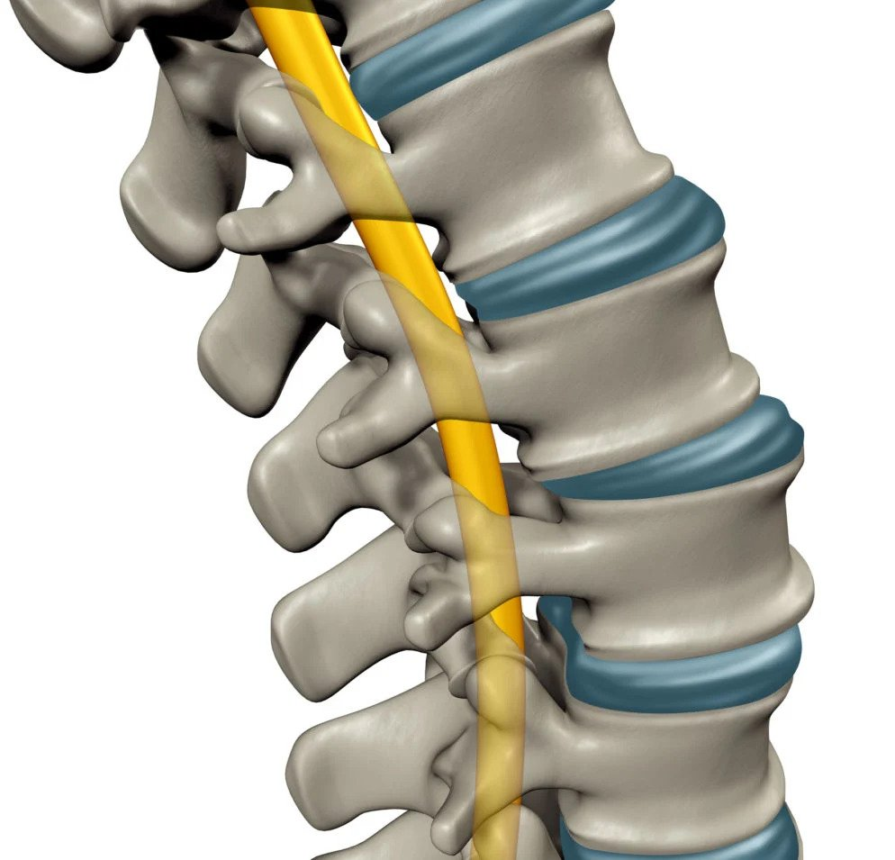 ezgif.com gif maker 5 1 showing the concept of Spine Fusion Alternative?